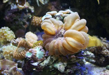 The Top New Coral Species of 2013