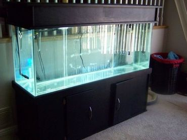 Water Testing in Your Freshwater Aquarium