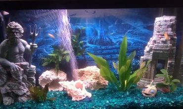 Choosing a Freshwater Aquarium Substrate