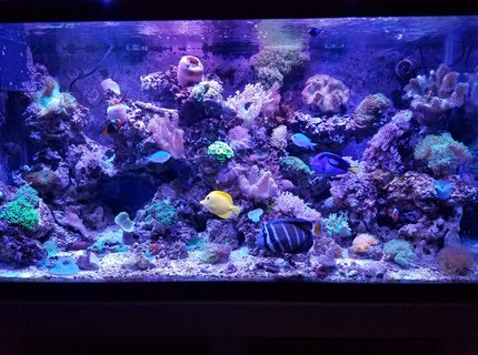 90 gallons saltwater fish tank (mostly fish, little/no live coral) - Fishhhhhy