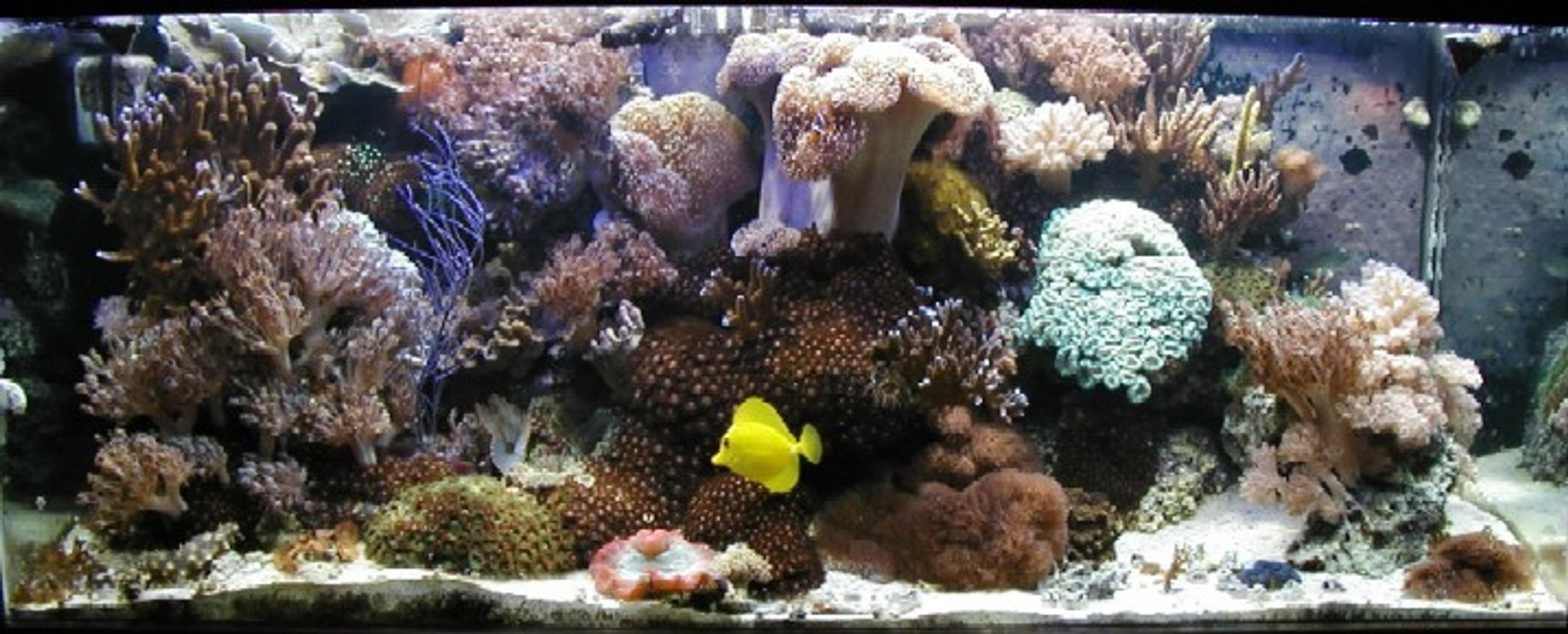 fish tank picture - 80g Reef with center overflow and Eco-system filtration, 2-250w Iwasaki MH and 2-110w VHO Actinic. Auto topoff