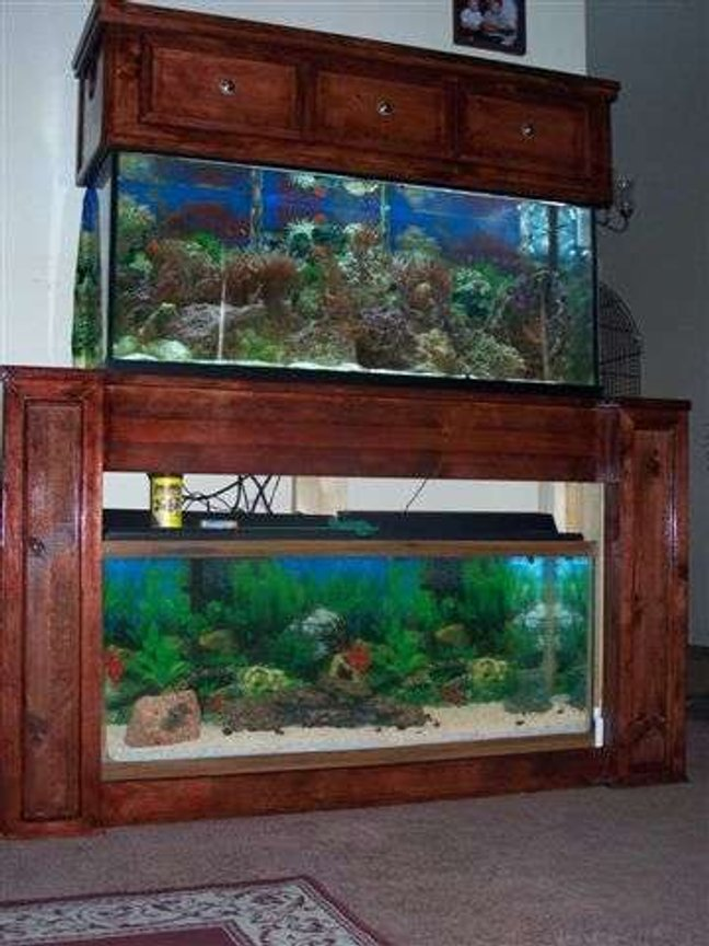 fish tank picture - Both Worlds