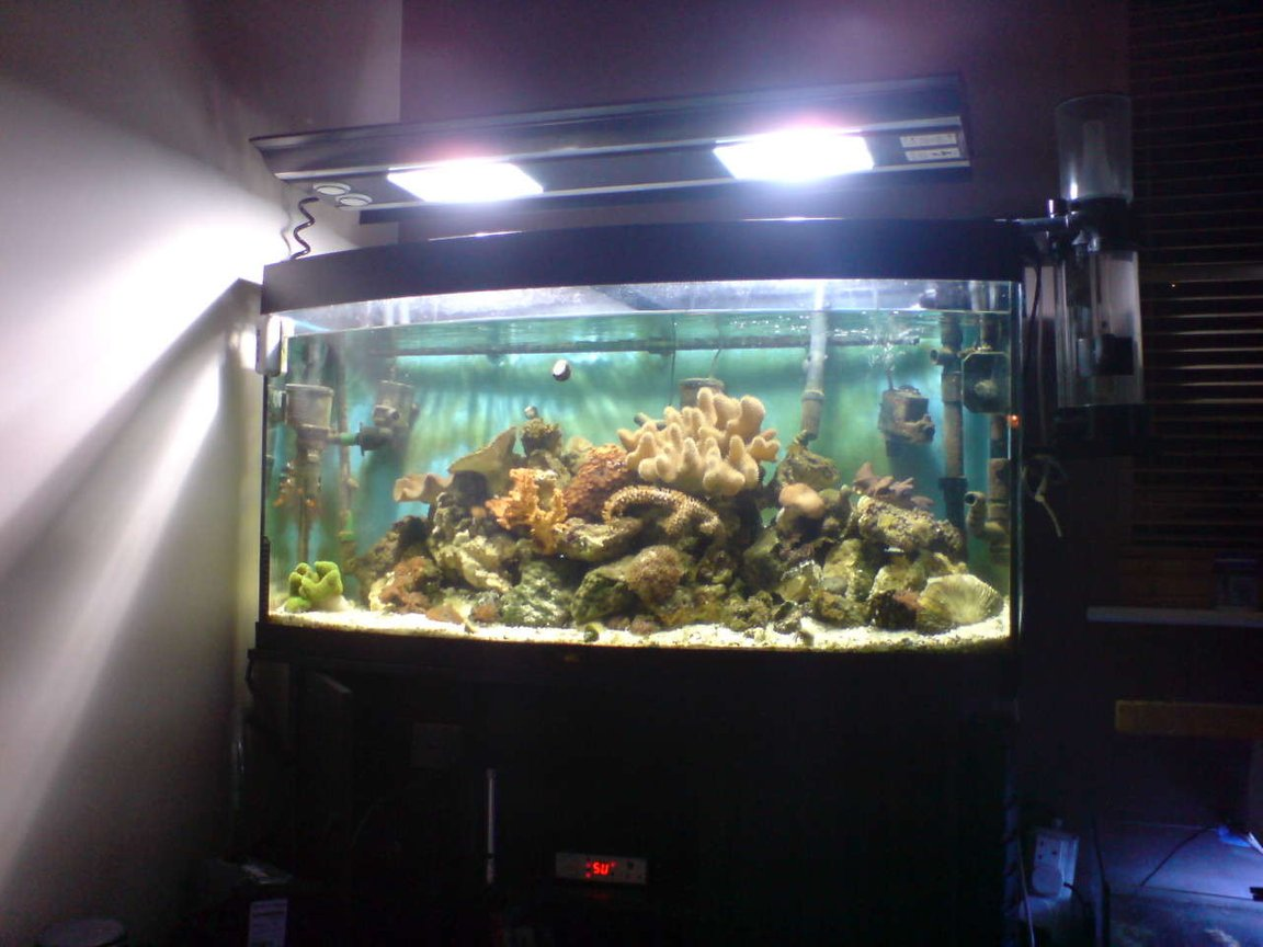 fish tank picture - here is the full set up