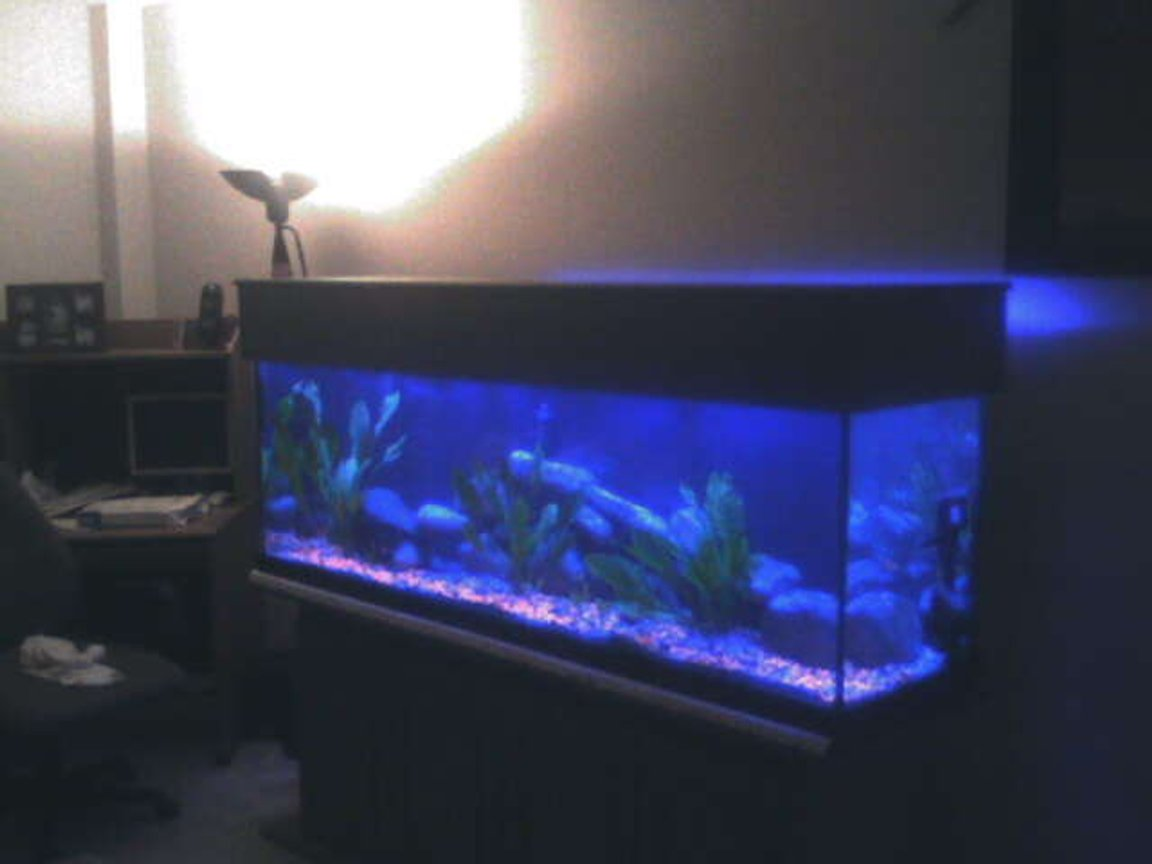 fish tank picture - blue lights