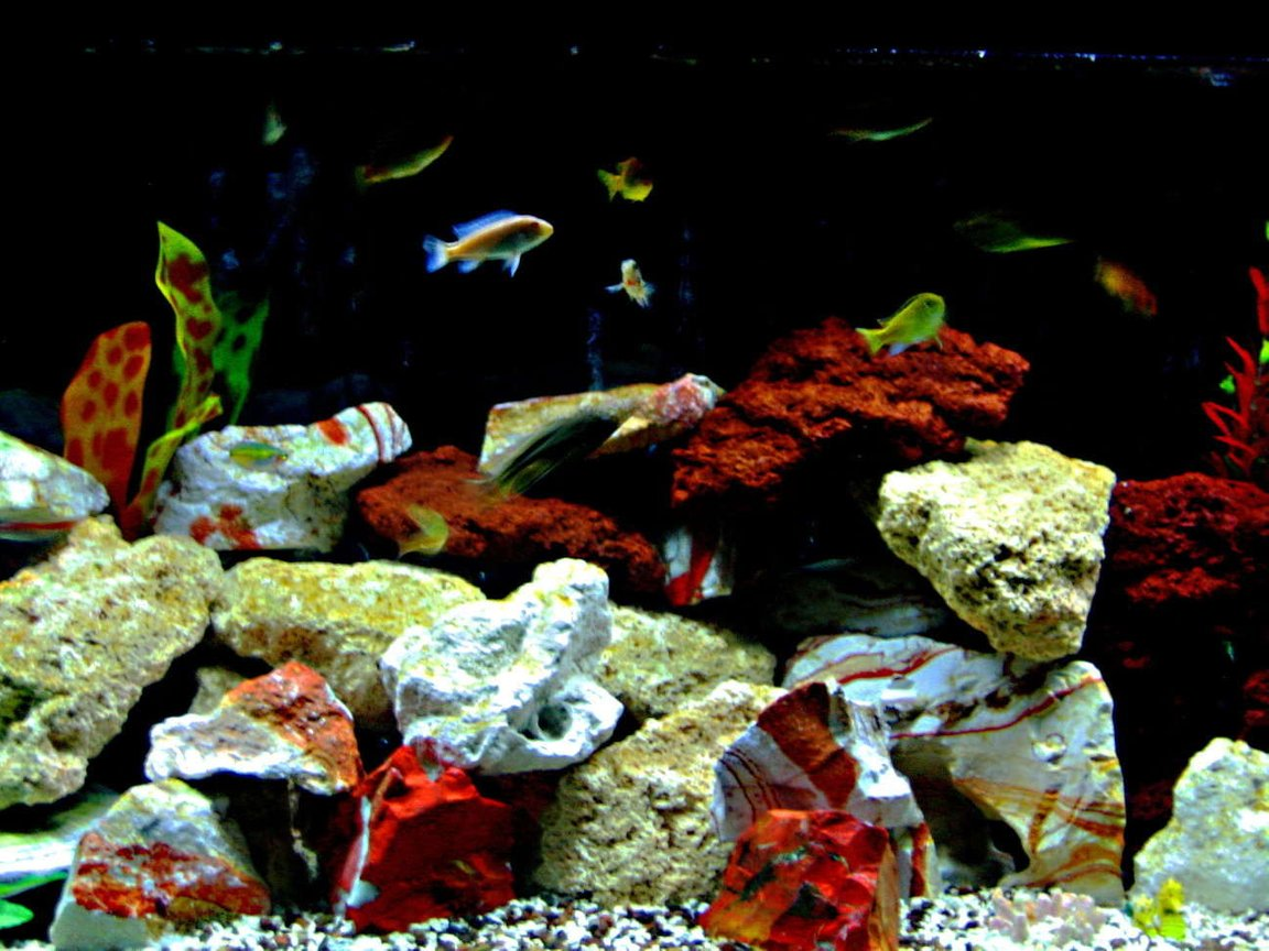 fish tank picture - General
