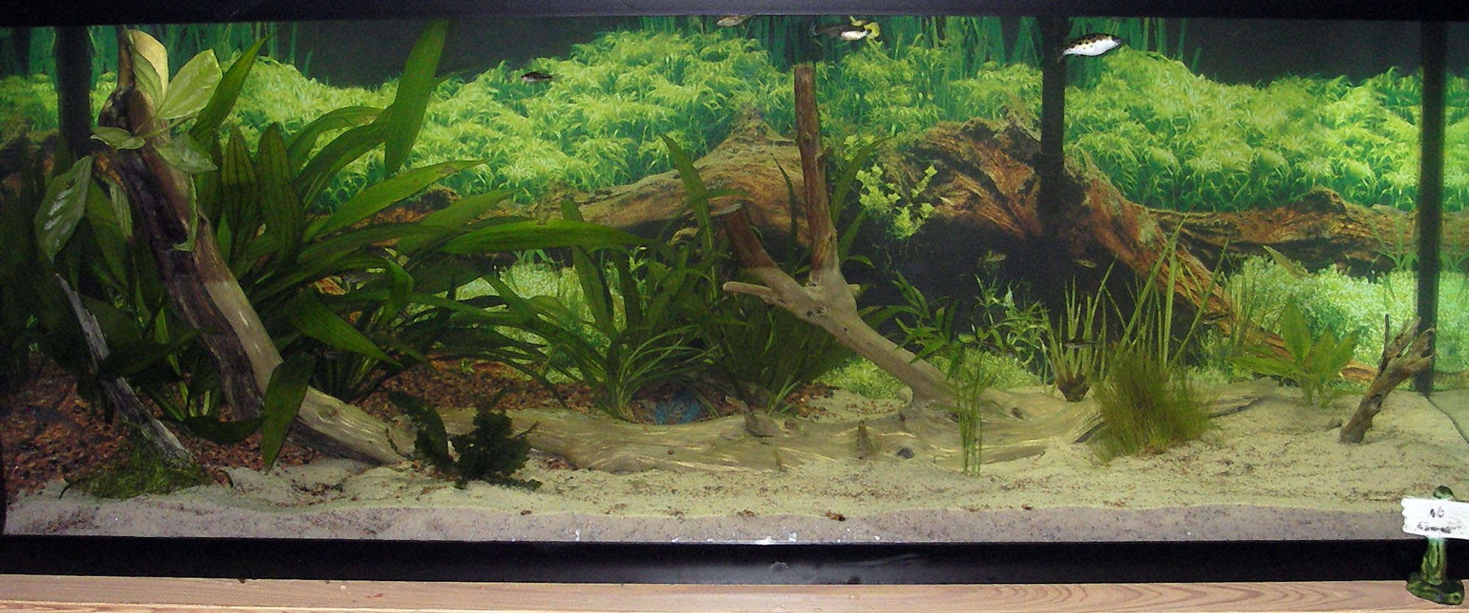 fish tank picture - Older pic.