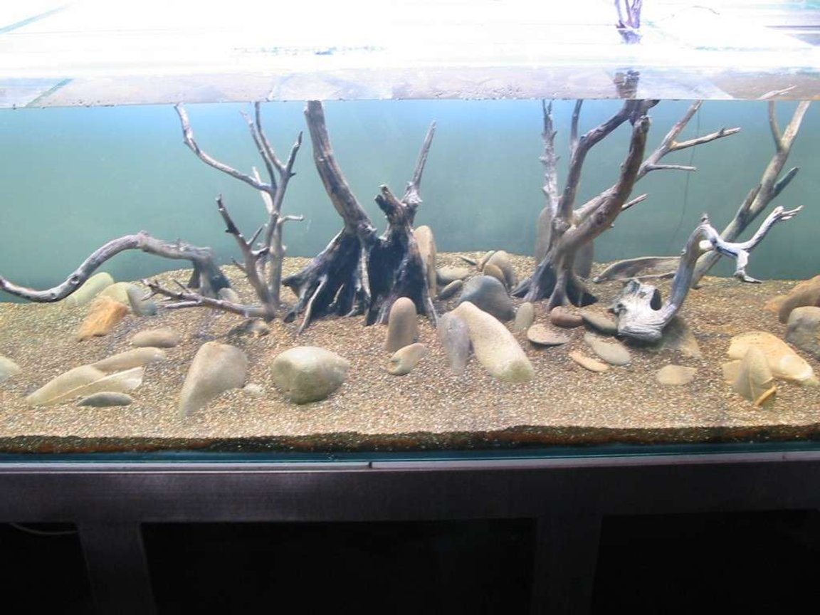 fish tank picture - Rock work and mangrove root