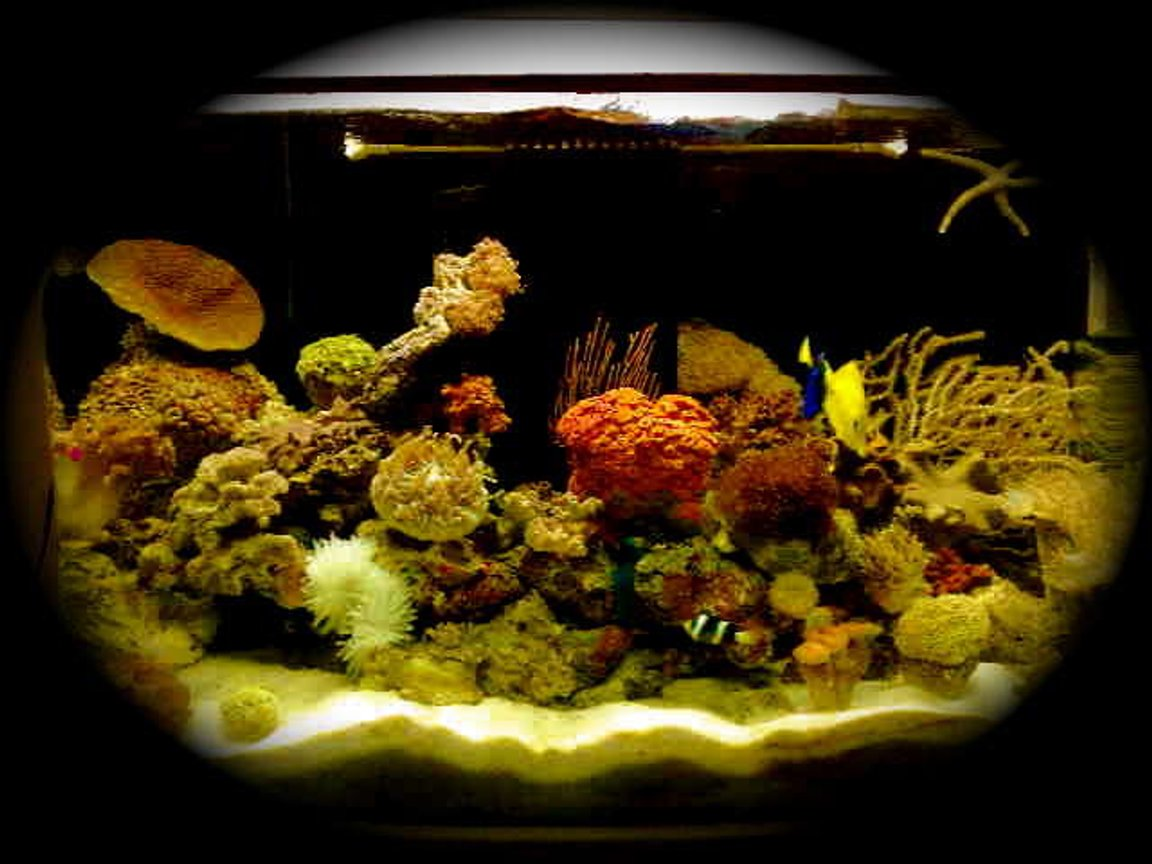 fish tank picture - beauty 1