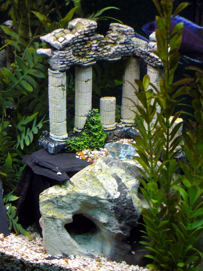 fish tank picture - hilltop ruins
