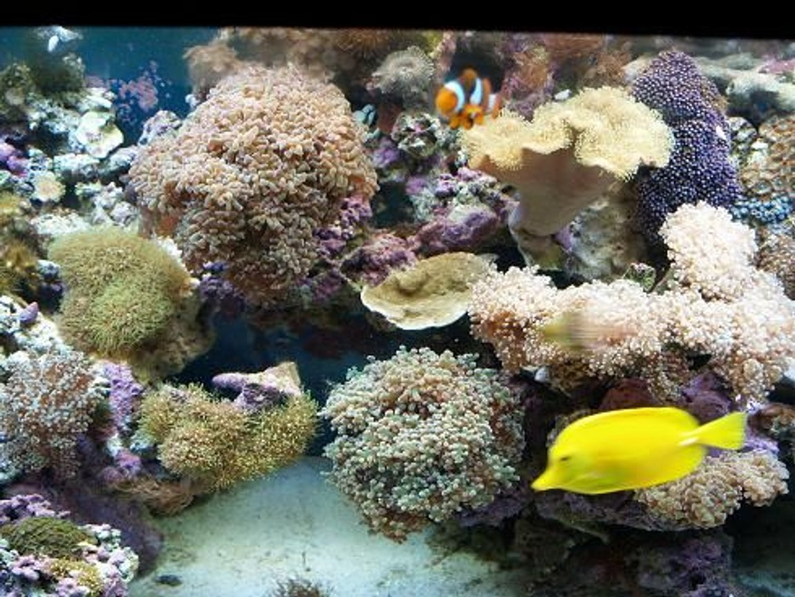 fish tank picture - 3 years