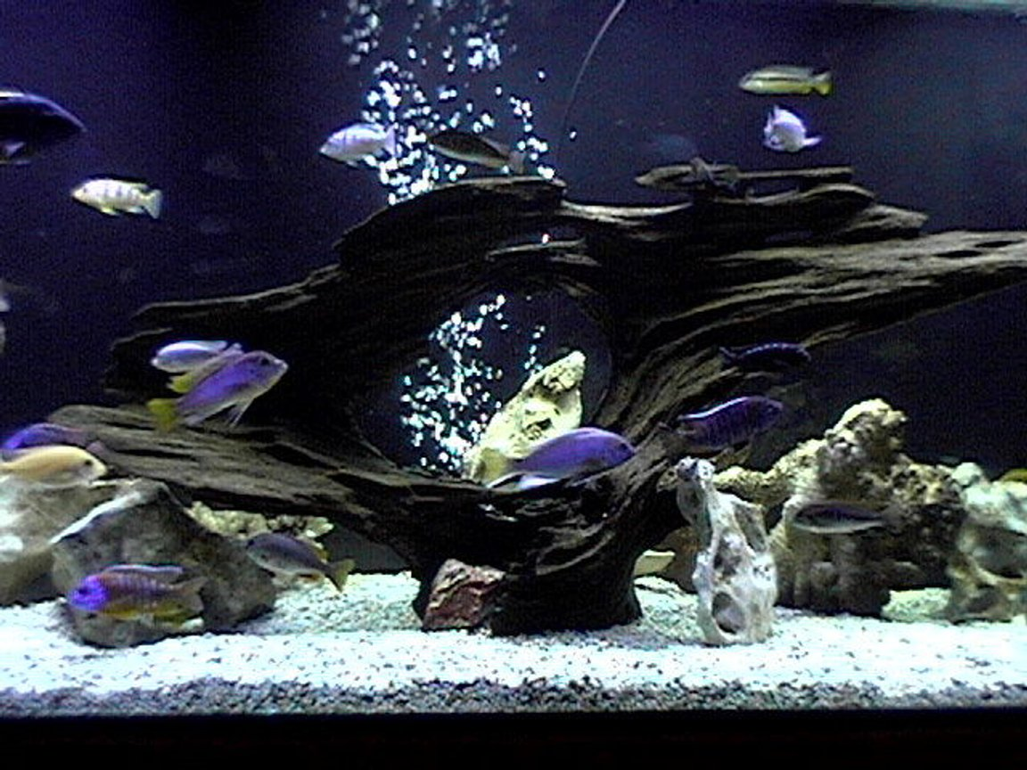 fish tank picture - 265