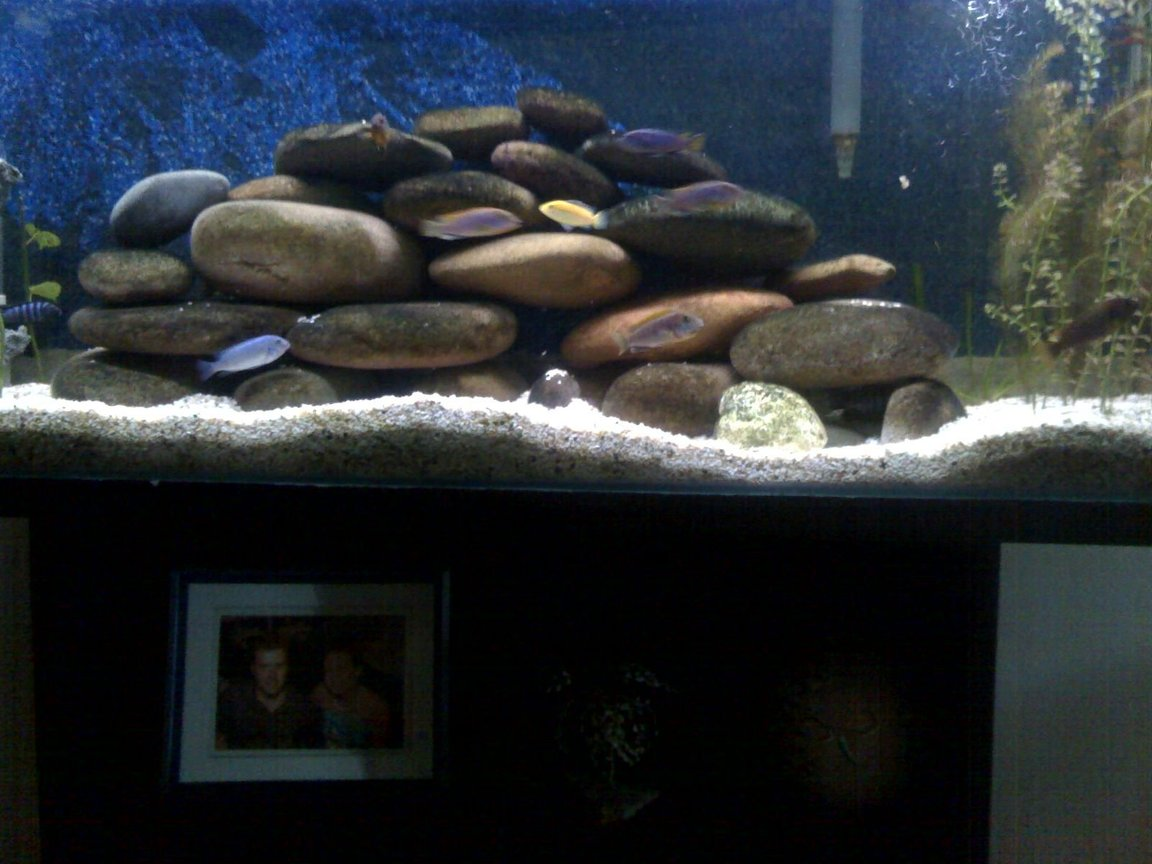 fish tank picture - close up of rocks
