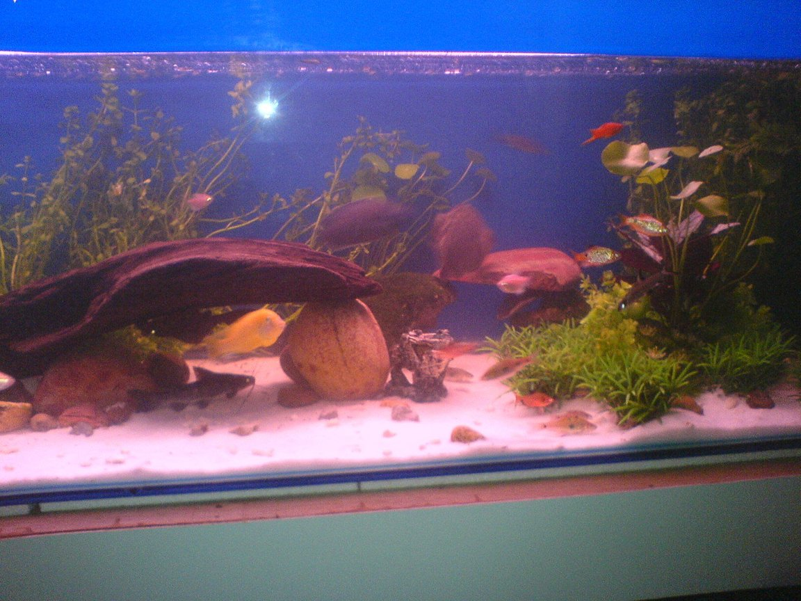 fish tank picture - Big boys playground