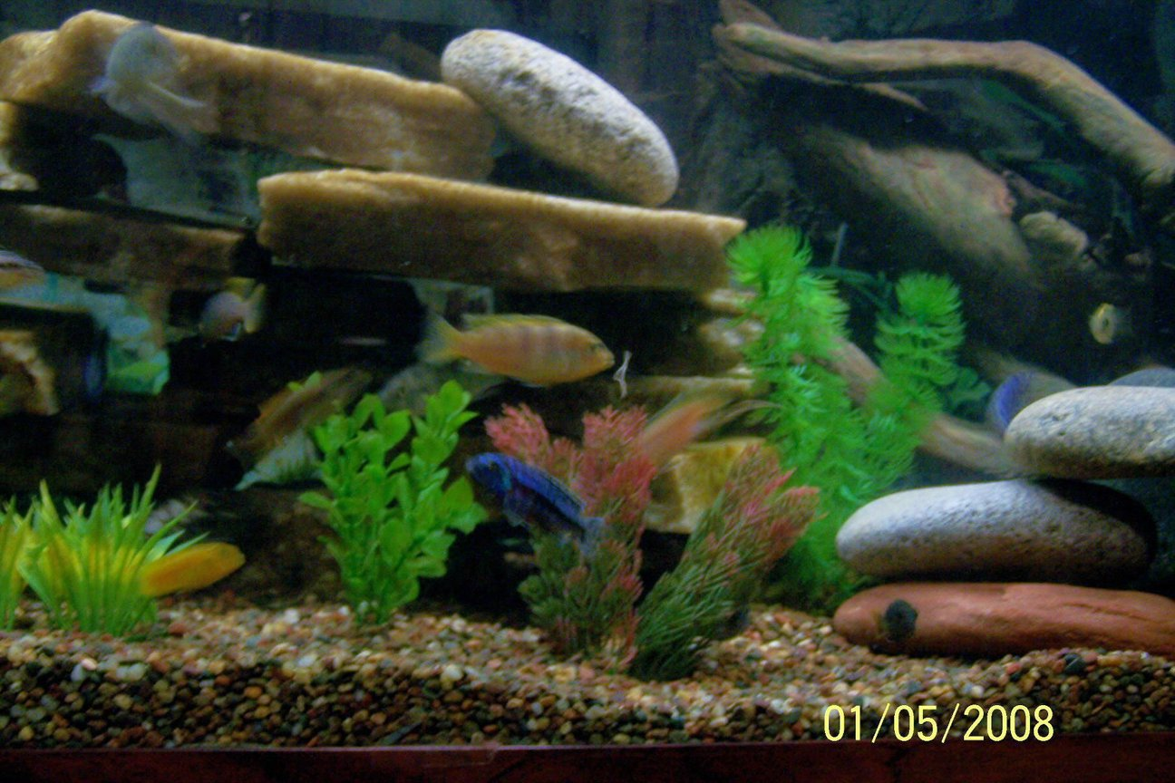 fish tank picture - Better view of tank
