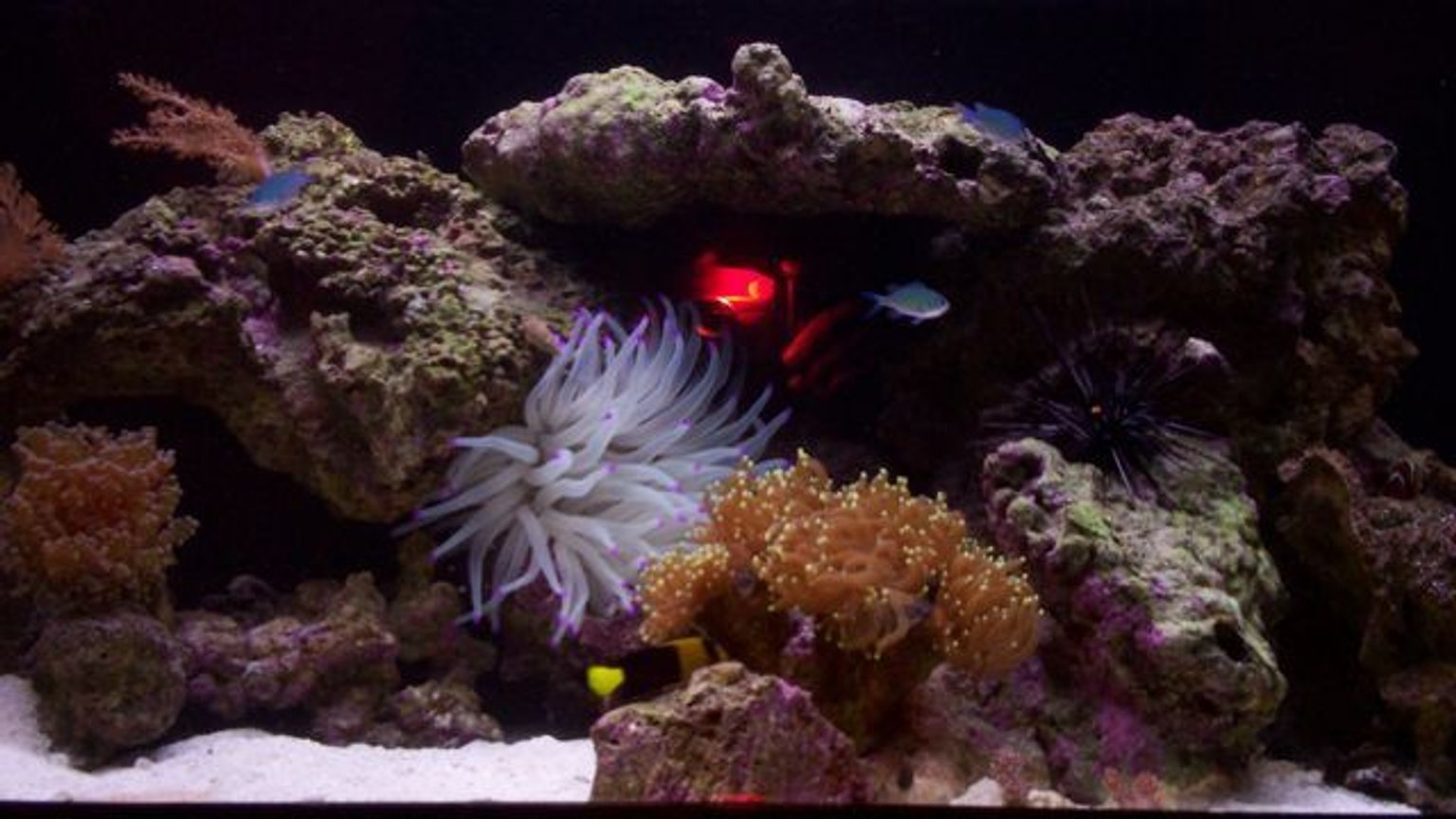 fish tank picture - another photo