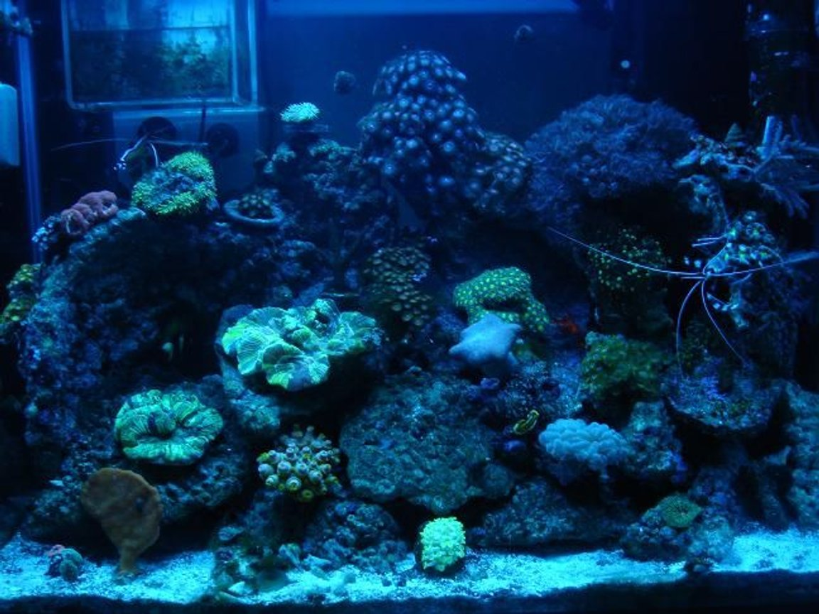 fish tank picture - under actinic lights