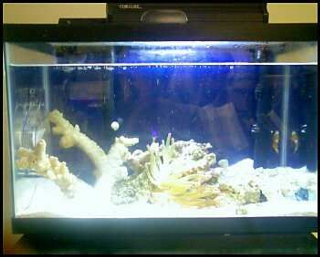 fish tank picture - the fishy therapy tank