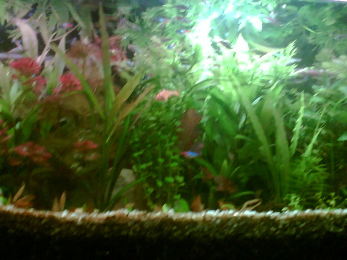fish tank picture - view add