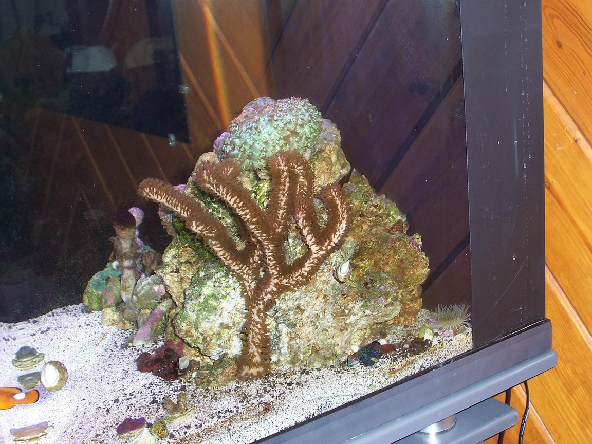 fish tank picture - side view--set up 1/28/08--long way to go