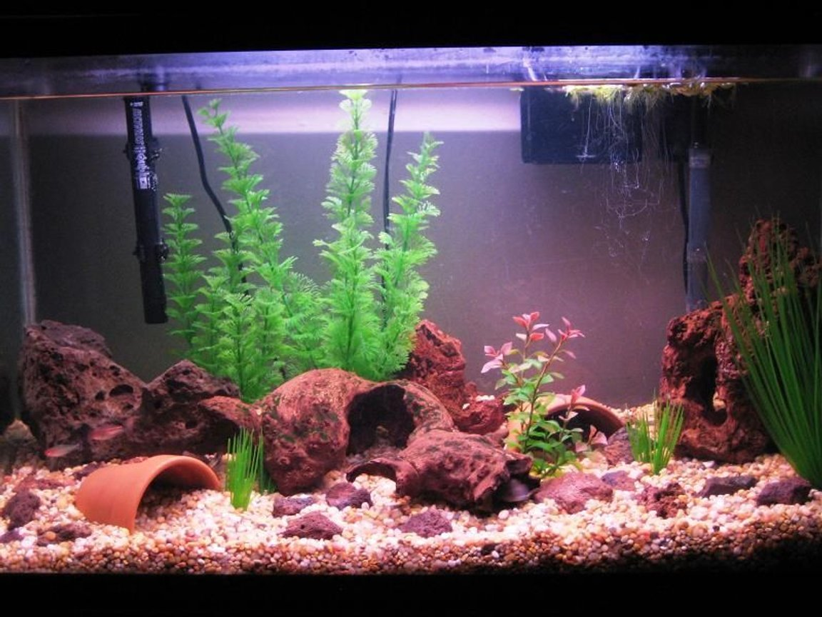 fish tank picture - Changed the layout once again.