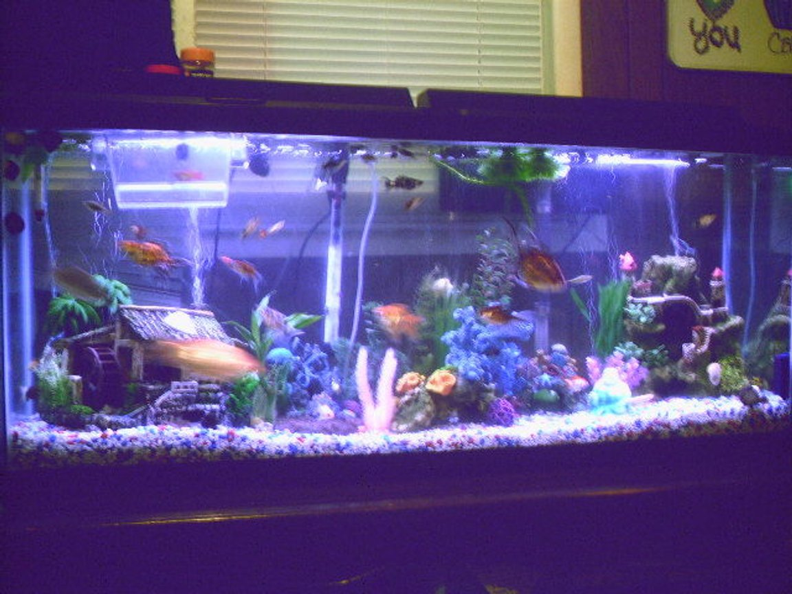 fish tank picture - New 55 Gallon. Set-up Has changed a little since then, but basically the same.