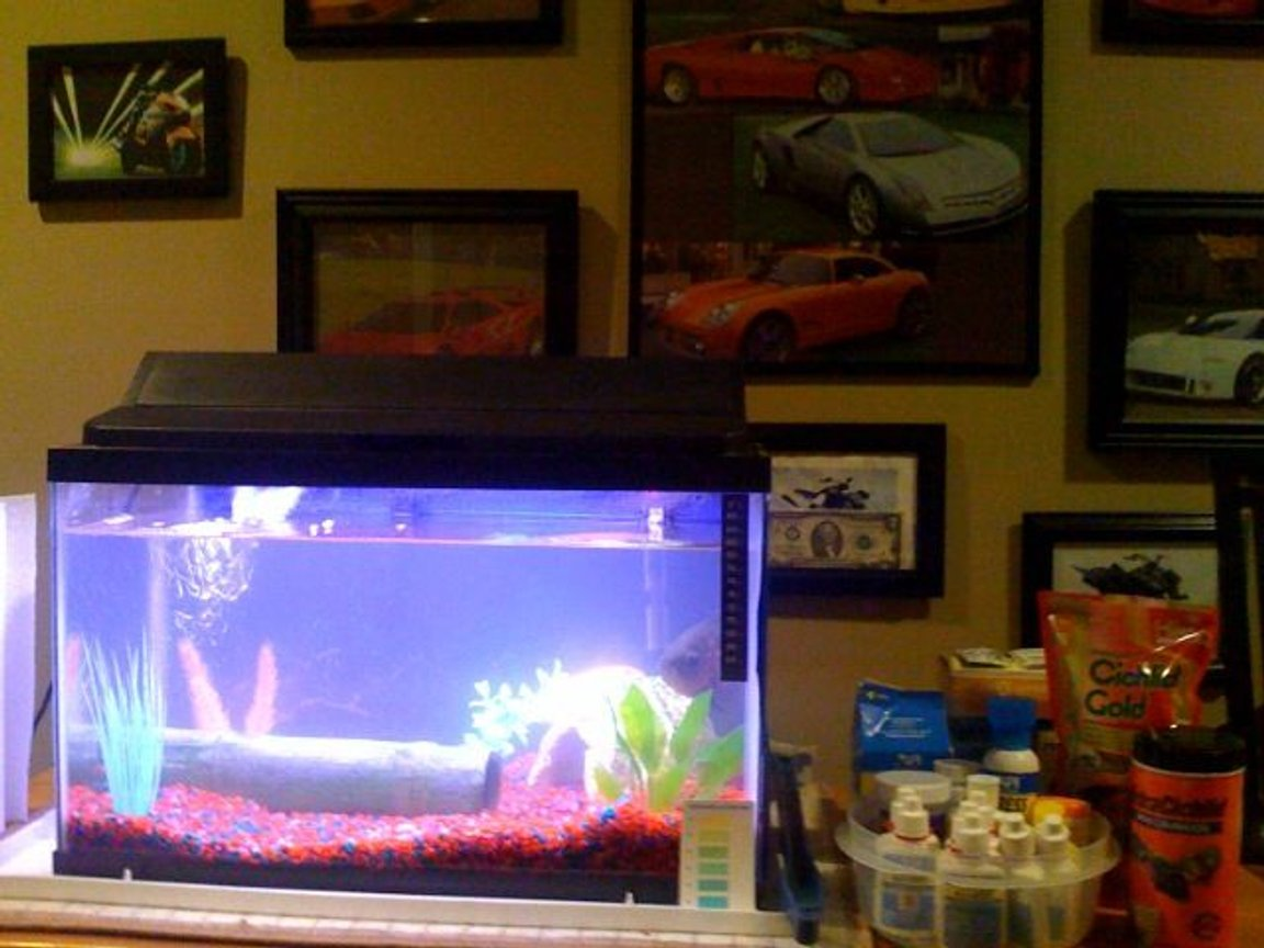 fish tank picture - fish tank and all of my tank stuff to keep it maintained