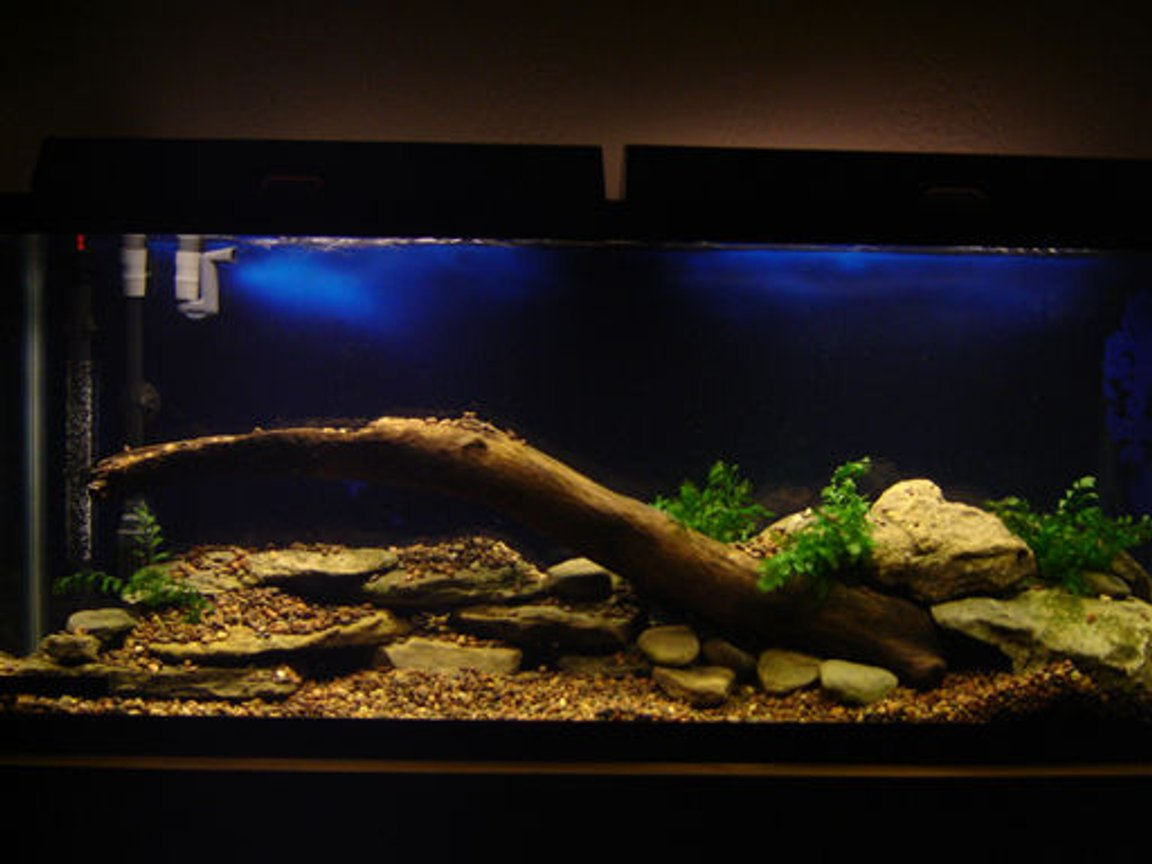 fish tank picture - My Freshwater tank