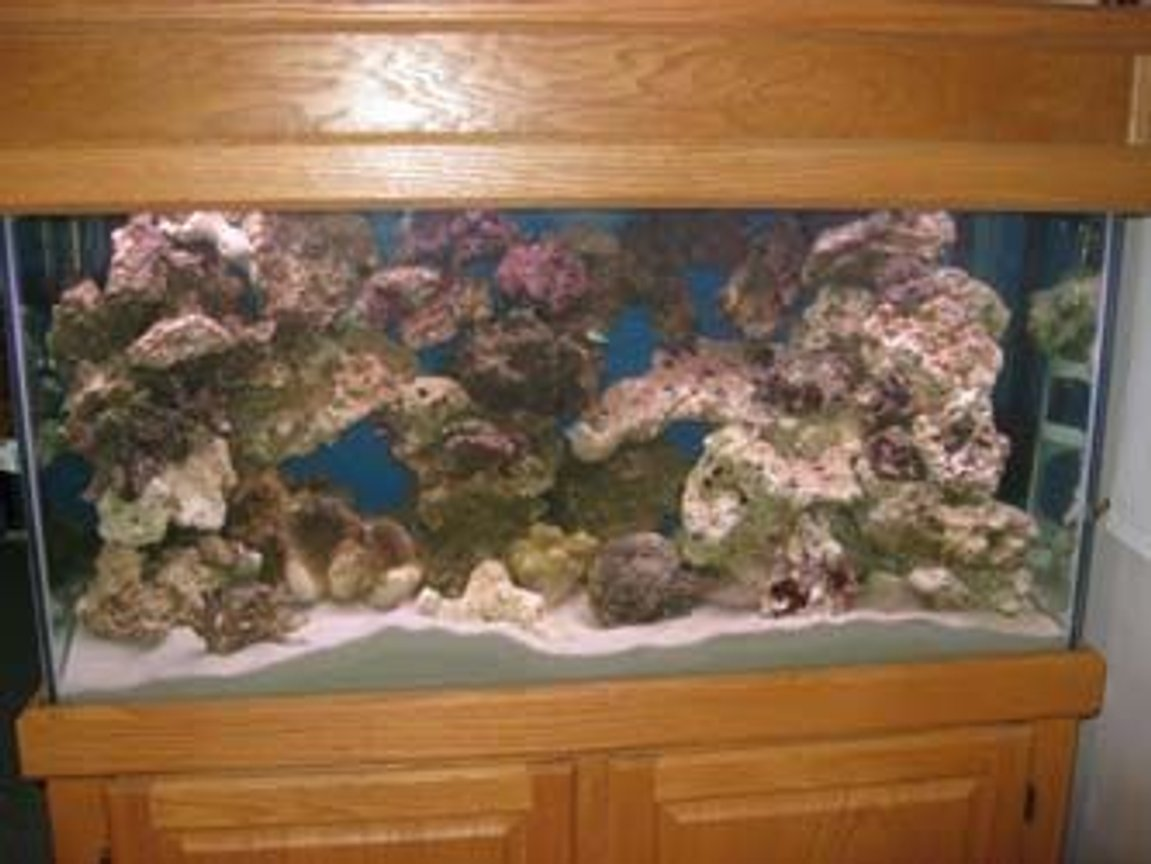 fish tank picture - Week 7; Just purchased 80 lbs. more of live rock 3 Green Chromis & a pair of Clowns..