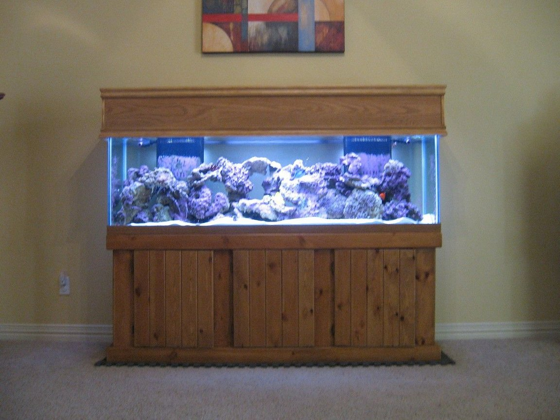 fish tank picture - Custom Canopy