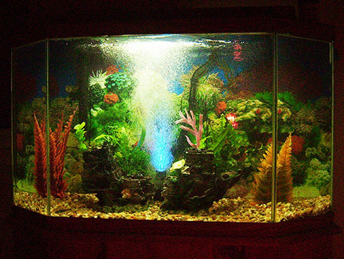 fish tank picture - Cost was $99.83 exluding tank and filter. (including 6 fish)