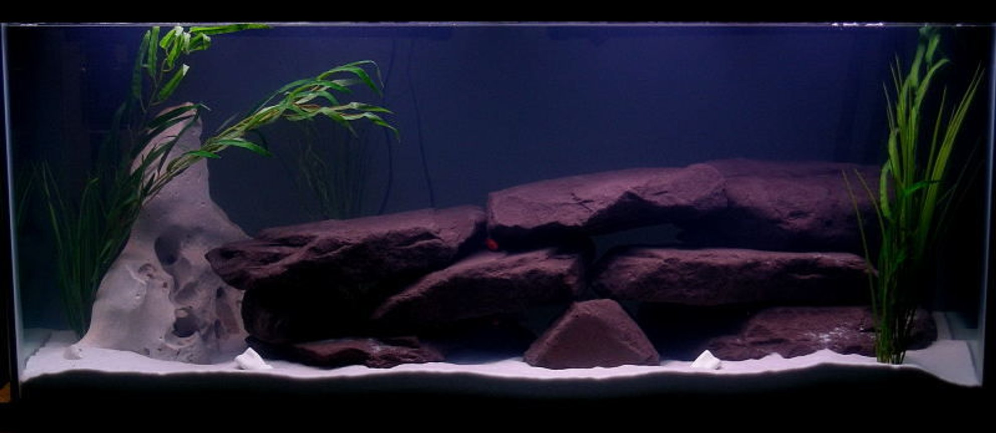 fish tank picture - 75Gal