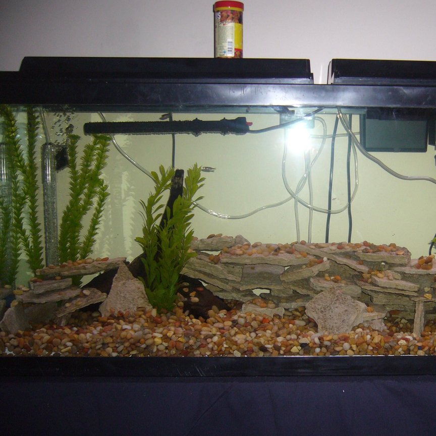 fish tank picture - another pic