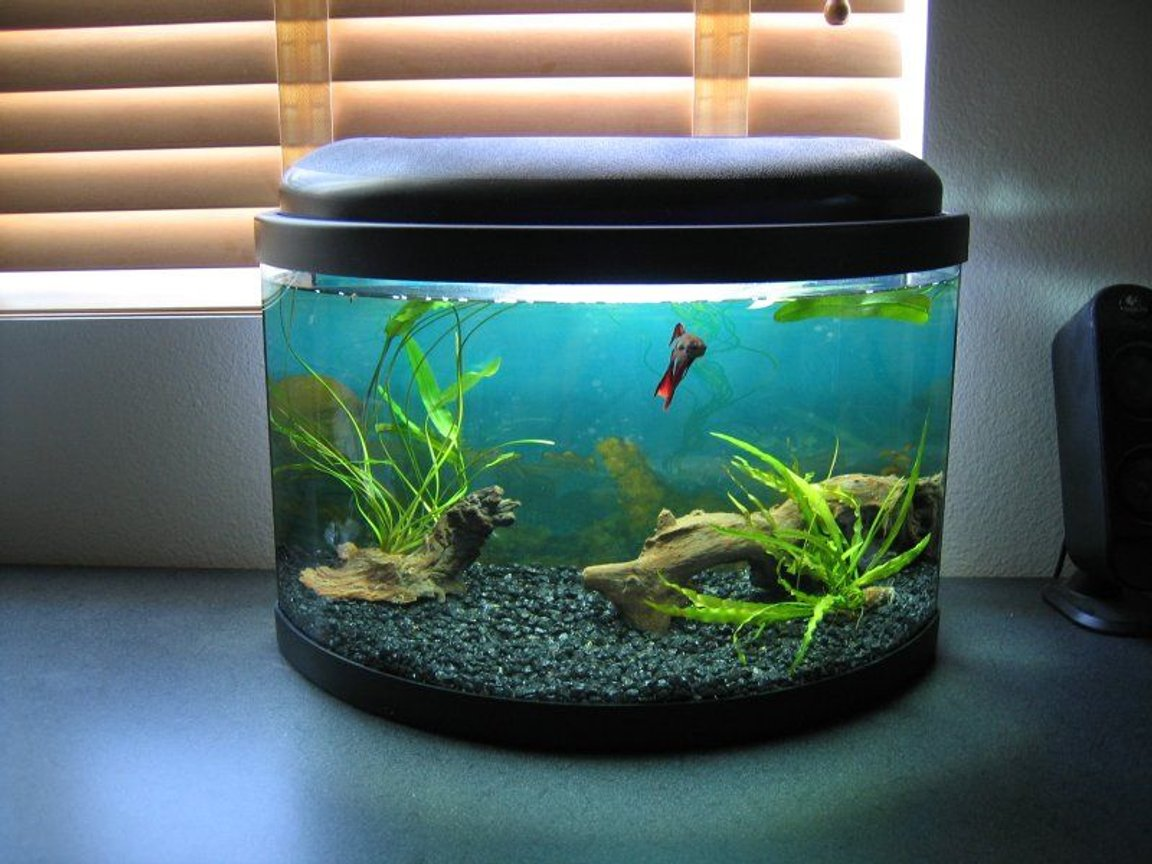 fish tank picture - 5 gallon bow front betta tank