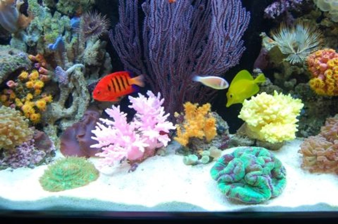 fish tank picture - The middle picture of our tank (IF YOU DO NOT LIKE OUR PICTURES THEN YOU DO NOT HAVE TO LOOK AT THEM, BUT VOTING 0 IS VERY NEGATIVE ON YOUR PART) PLEASE JUST MOVE ON - THANKS!!!!