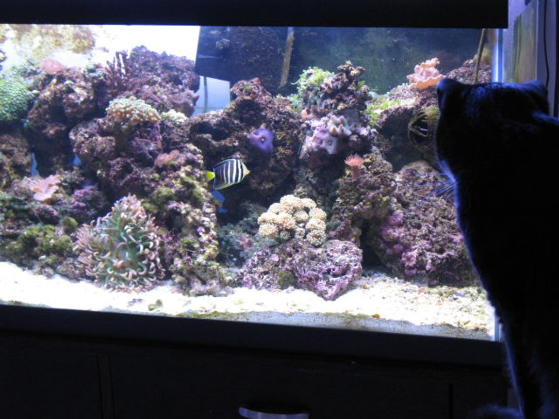 fish tank picture - the cat loves to sit and check it out