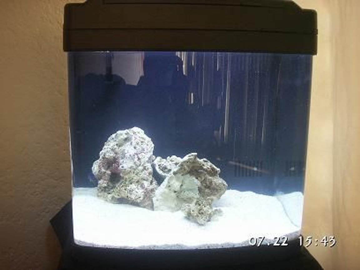 fish tank picture - hola tank