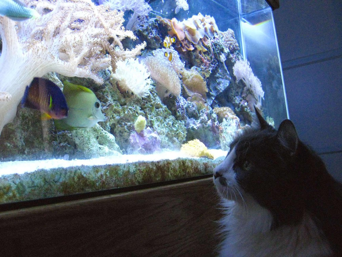 fish tank picture - Muffin watching the tank
