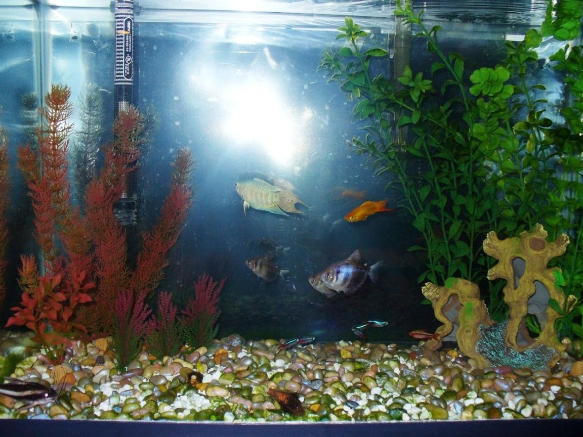 fish tank picture - 20 gallon, new aquascape, same fish, does it look better?