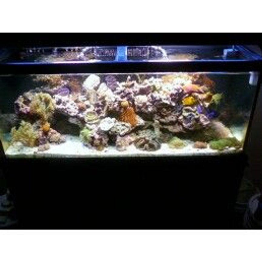 fish tank picture - another full view