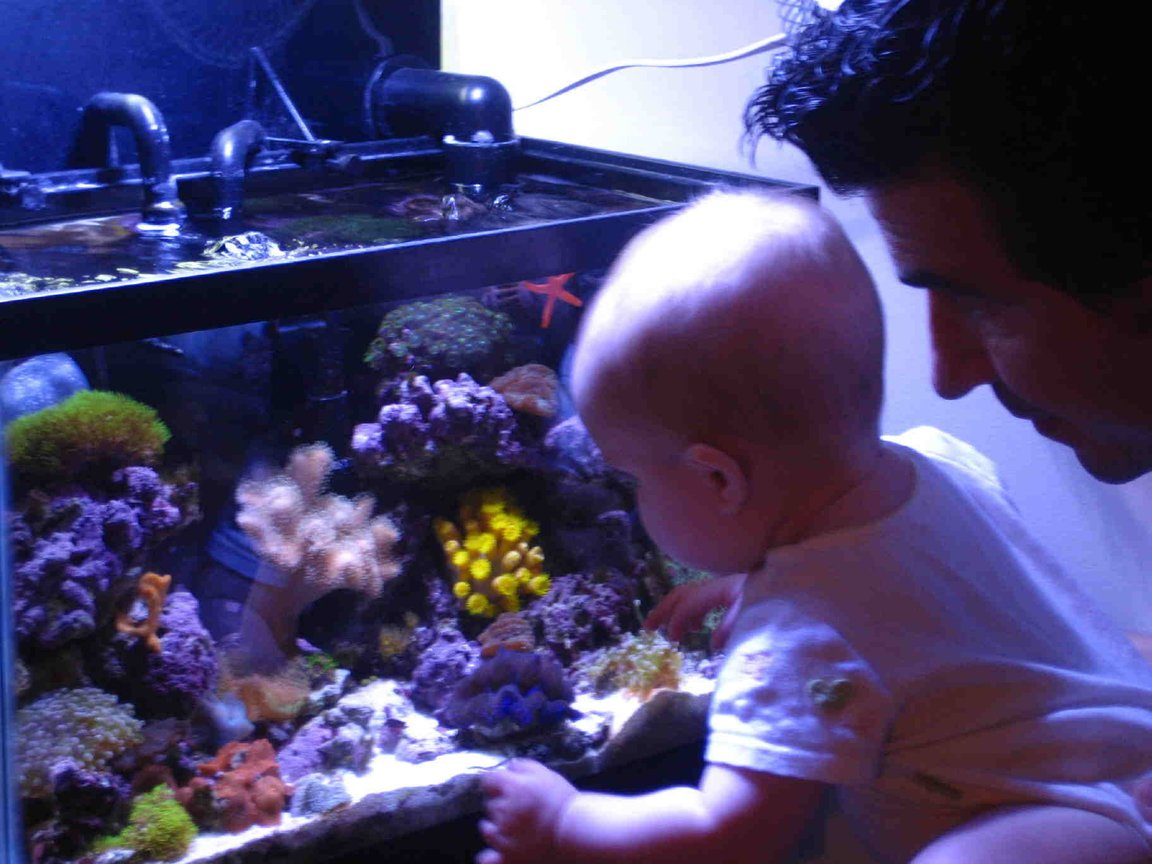 fish tank picture - WOW!!
