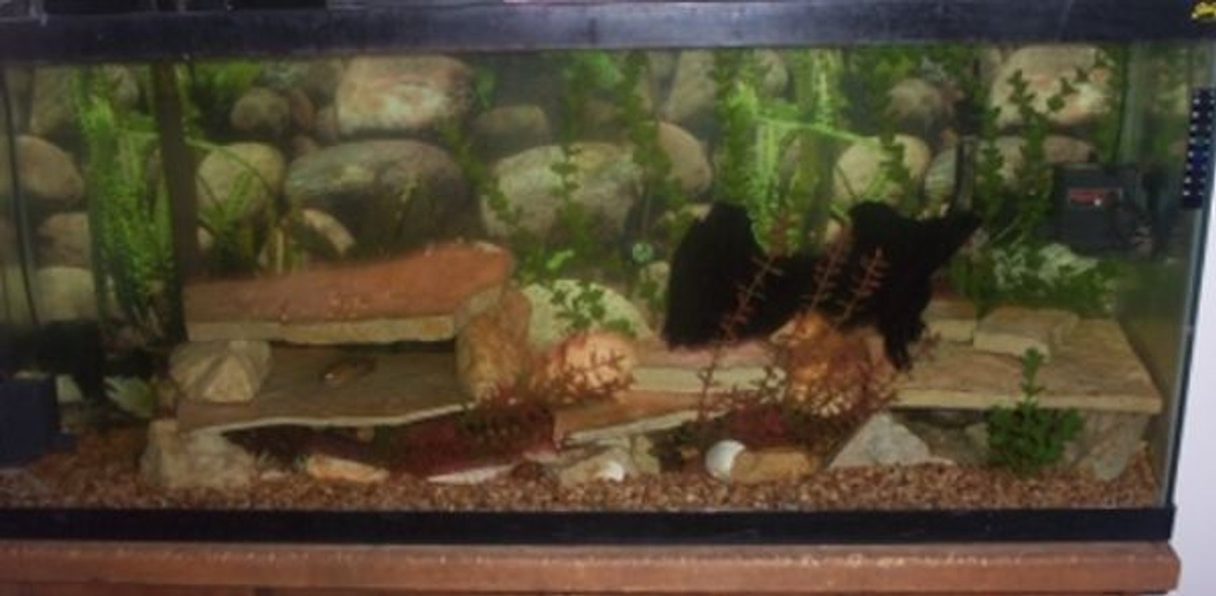 fish tank picture - I've updated my tank.Put in 2 pumps.1 at bottom left and 1 at top right to keep water moving.I've also took out the seashell stuff and added driftwood ant a couple more shelfs.Made the tank more natural looking.
