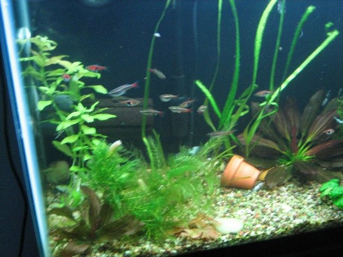fish tank picture - .