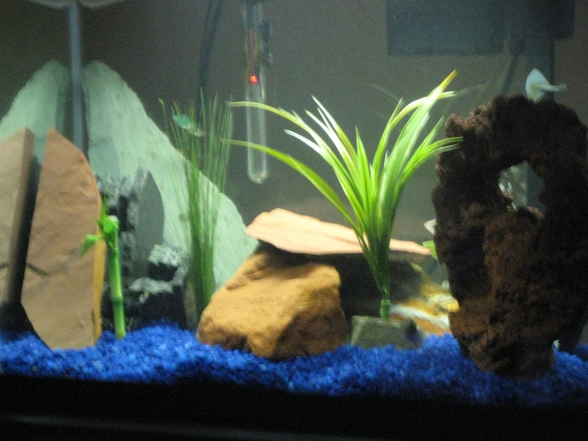 fish tank picture - Not the best pic...