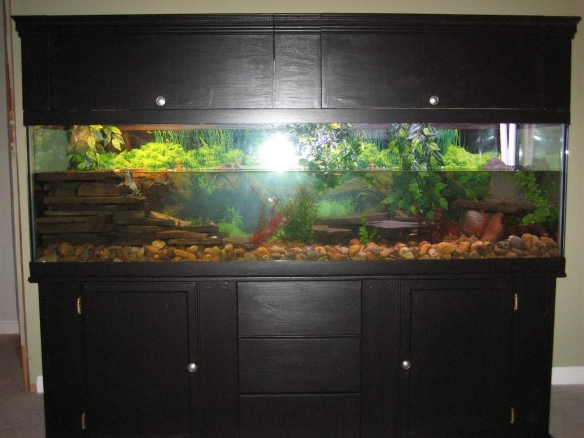fish tank picture - Image of home made custom turtle tank setup.