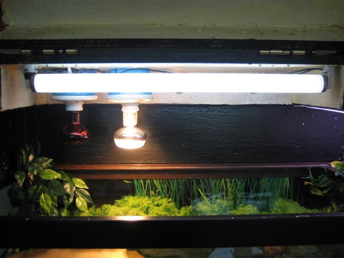 fish tank picture - left lights