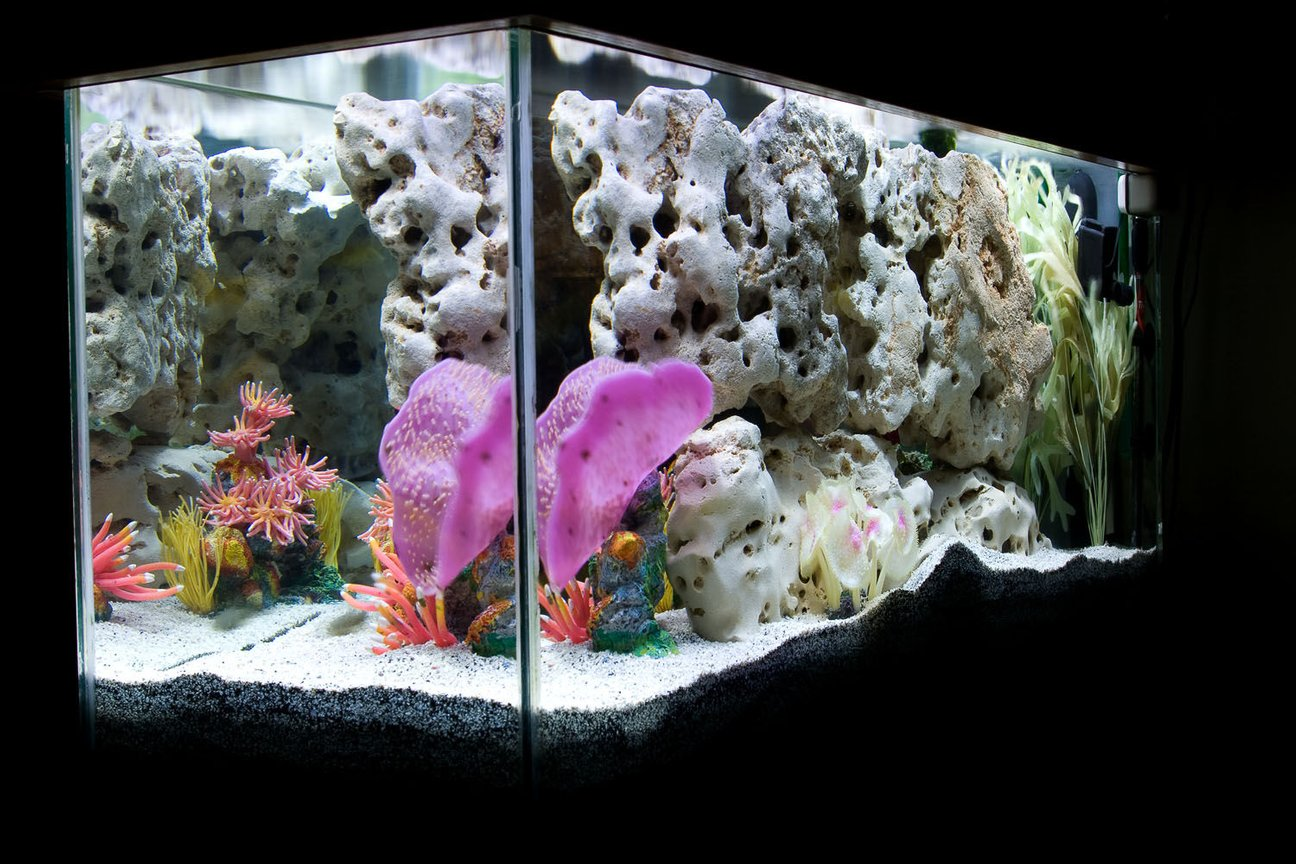 fish tank picture - Head-on / Right-side view.