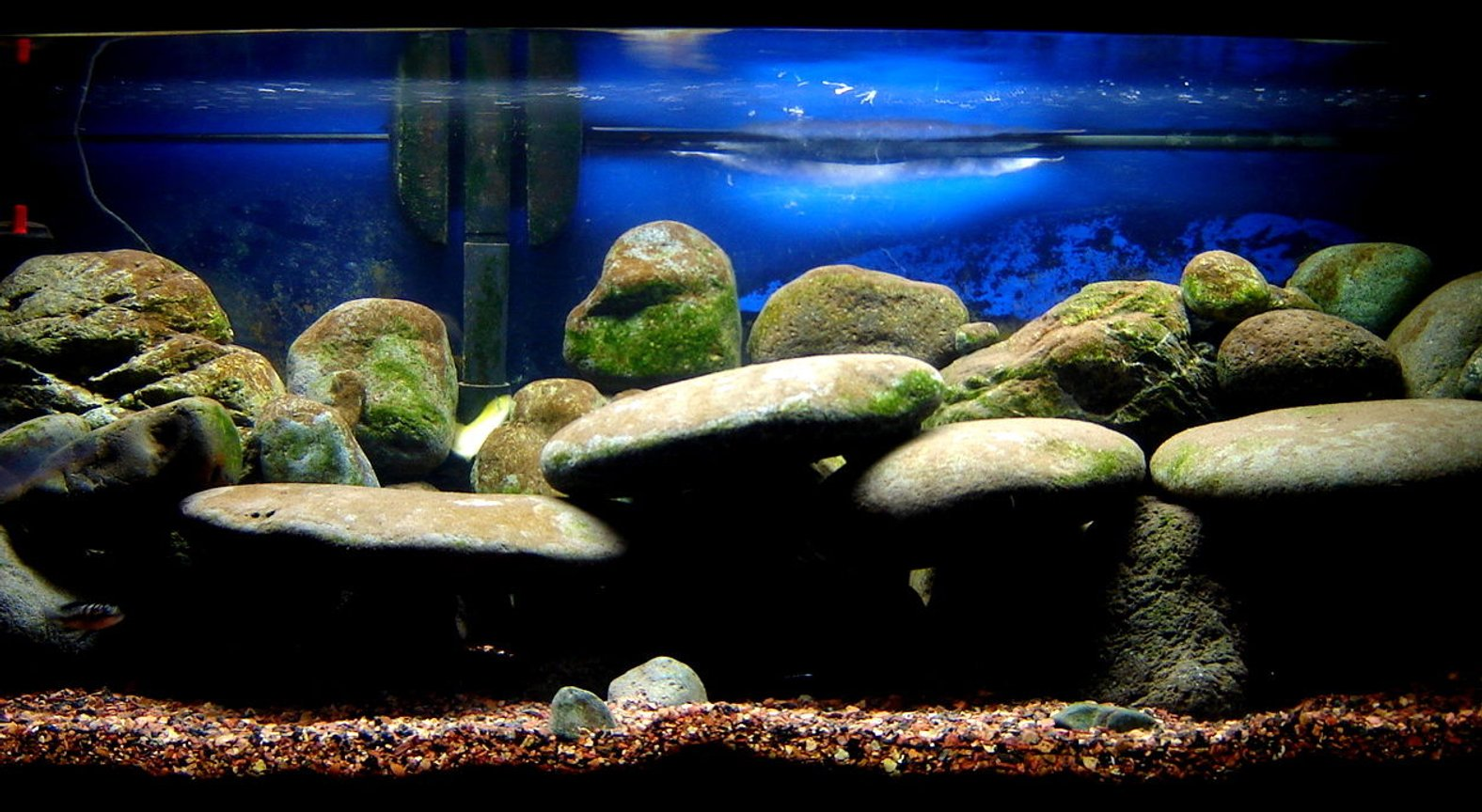 "fish tank picture - My Malawi Rock Tank. I know, ""where are the fish?"" trust me there in there. There just shy."