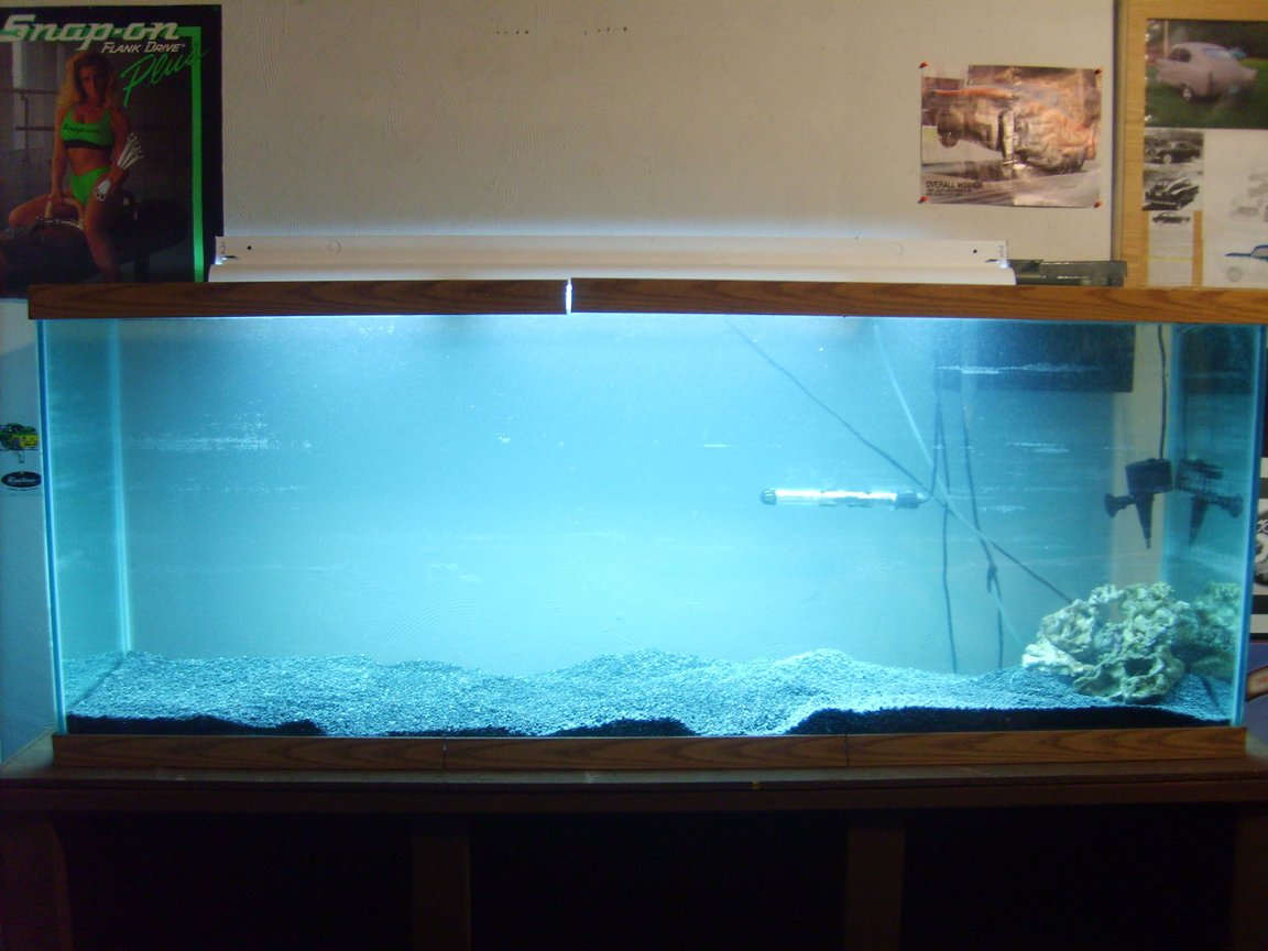 fish tank picture - No fish