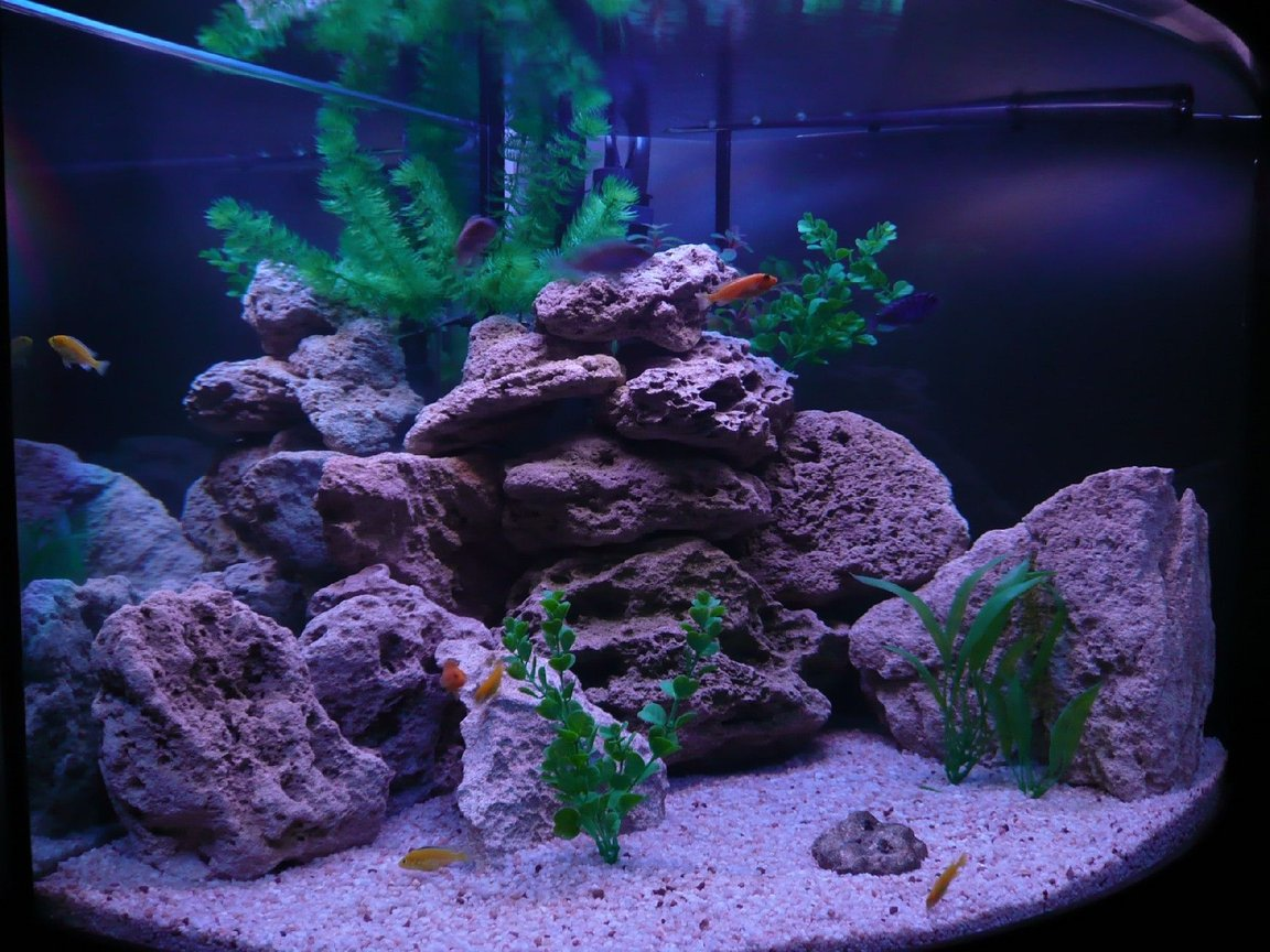 fish tank picture - Diff Angle