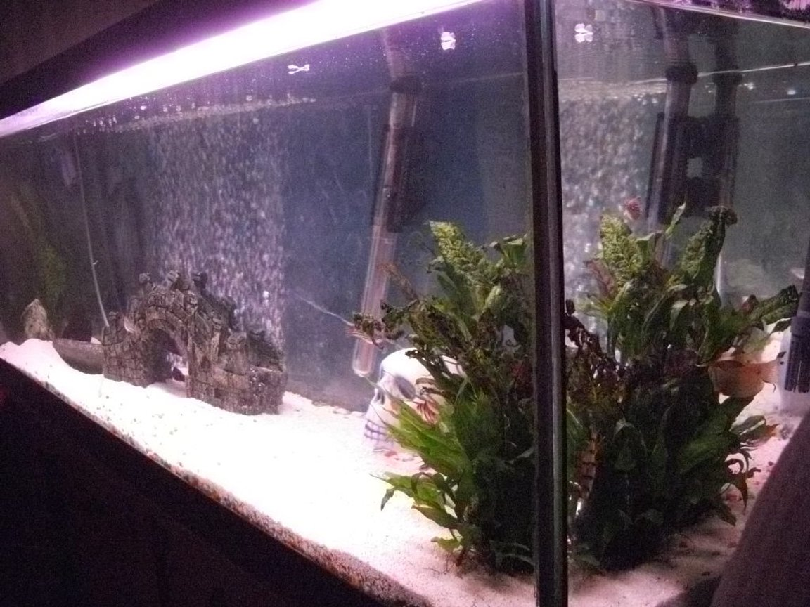 fish tank picture - from the side
